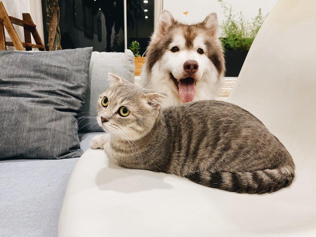 Allesfresser Hund ? Fleischfresser Katze?